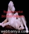 dog-marble-statue16367.jpg