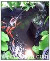 gadern-aquarium9871.jpg