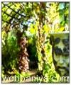 garden-decoratives-products3488.jpg
