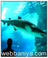 public-aquarium9388.jpg