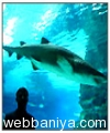 public-aquarium9870.jpg