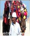 rajasthan-with-pushkar-tour4619.jpg
