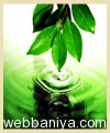 spice-&-herbal-oils11995.jpg