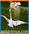 wildlife-and-birding-tours4412.jpg