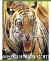 wildlife-photographic-safari4593.jpg