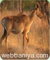 wildlife-tours4596.jpg